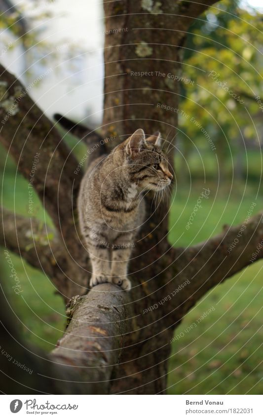 katze Katze 1 Tier Tierjunges niedlich Fell Katzenbaby Tigerkatze Baum Garten Haustier Klettern Neugier Gleichgewicht Erkundung spielerisch Geruch Schnurrhaar