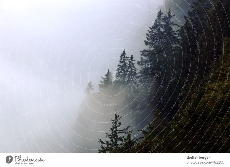durchdringend Natur Wasser weiß Baum Pflanze schwarz Wolken Wald dunkel kalt Herbst Holz grau Regen Luft Nebel
