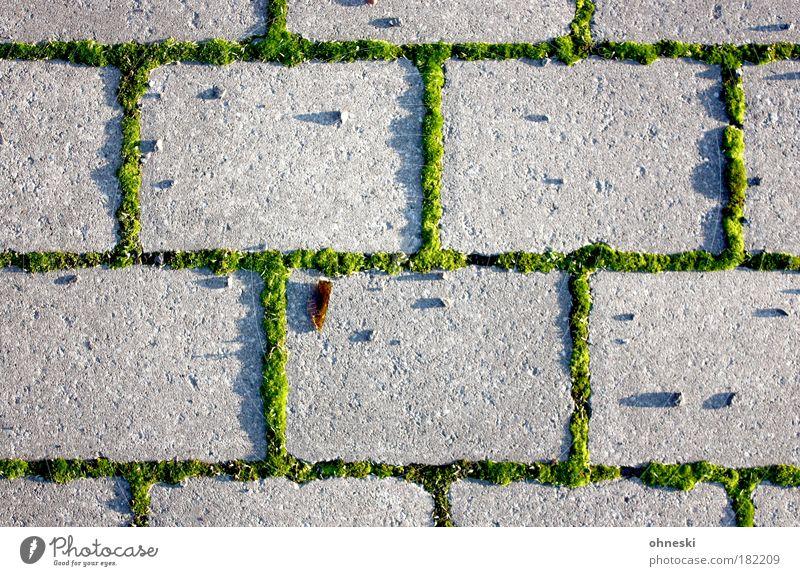 Unkraut vergeht nicht Farbfoto Muster Strukturen & Formen Menschenleer Abend Licht Schatten Kontrast Sonnenlicht Umwelt Natur Pflanze Moos Park Stein grün