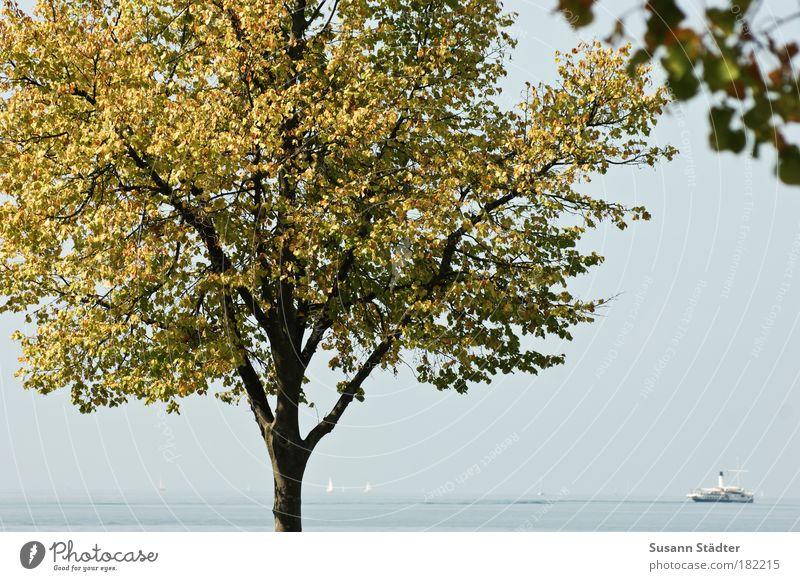 Postkarte aus Lindau Licht Kontrast Sonnenlicht Natur Wasser Baum Wellen Küste Seeufer Bucht Insel Schifffahrt Binnenschifffahrt Kreuzfahrt Passagierschiff
