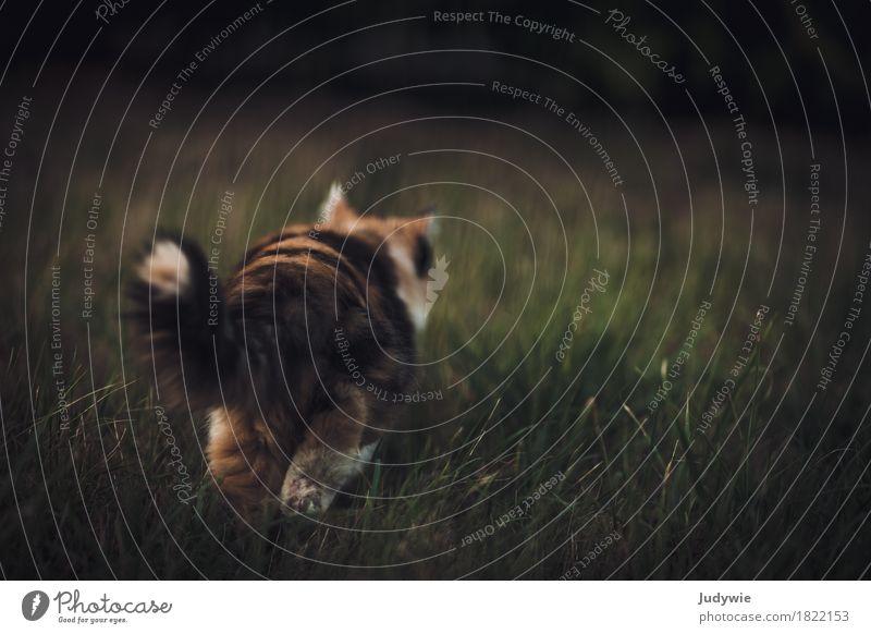 Samtpfötiger Abgang Katze Natur Tier ruhig Wege & Pfade Wiese Garten gehen Park elegant niedlich weich Gelassenheit Jagd Haustier Hauskatze