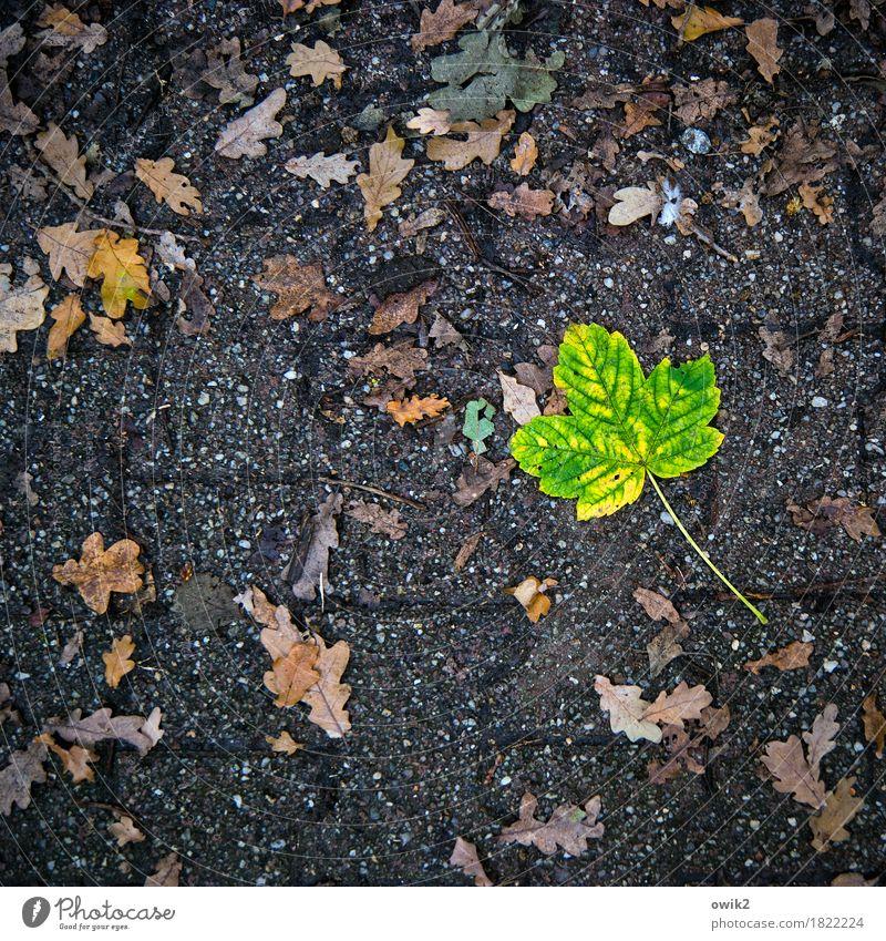 Sonderling Umwelt Natur Pflanze Herbst Blatt unten gelb grün orange Traurigkeit Sorge Trauer Einsamkeit Idylle rein Schmerz Verfall Vergänglichkeit