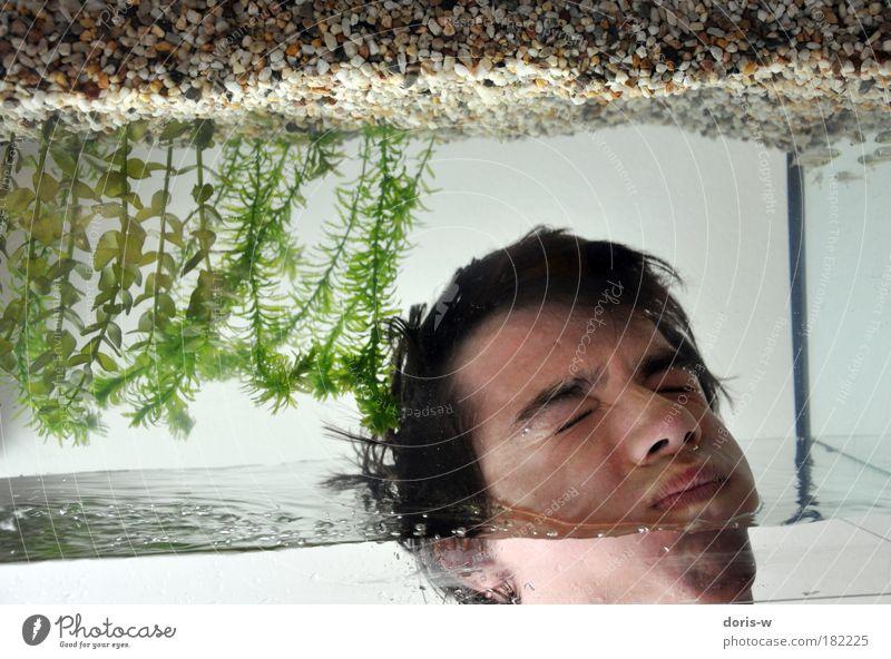 aufgetaucht Junger Mann Jugendliche Erwachsene Kopf Gesicht tauchen Aquarium Wasser Fisch Wasserpflanze Wasseroberfläche verkehrt falsch Luft Luftblase Kieme