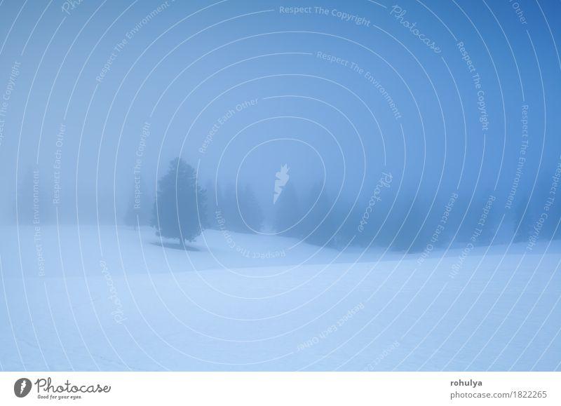 Winterberge im dichten Morgennebel Schnee Berge u. Gebirge wandern Natur Landschaft Wetter Nebel Baum Wald Hügel Gelassenheit Fichte nadelhaltig kalt