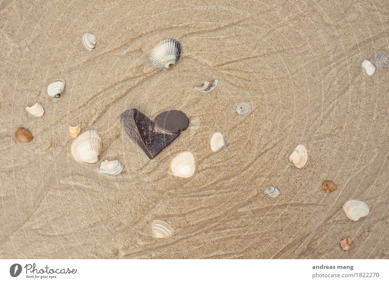 #326 / steinernes Herz Ferien & Urlaub & Reisen Tourismus Sommerurlaub Strand Meer Sand Nordsee Muschelschale Stein ästhetisch authentisch einfach Kitsch