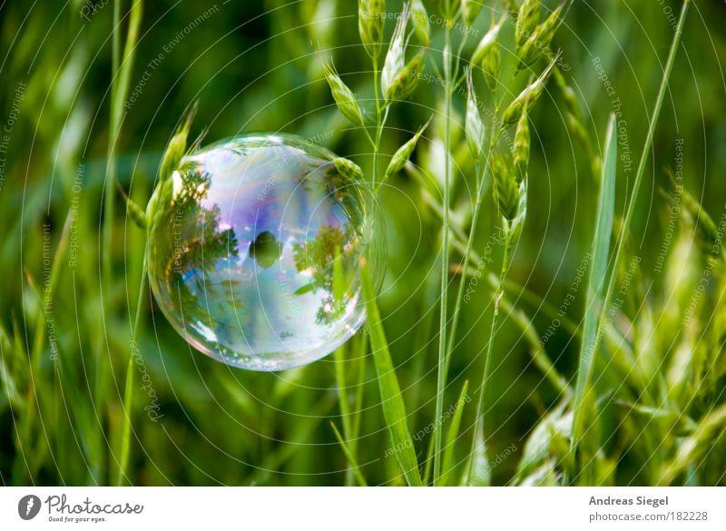 PC Farbfoto Außenaufnahme Nahaufnahme Detailaufnahme Menschenleer Tag Reflexion & Spiegelung Lifestyle Stil Freude Freizeit & Hobby Umwelt Natur Erde Gras Wiese