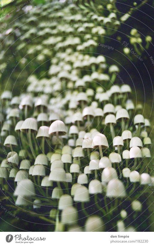 pilze Natur Herbst Lebensmittel analog Rauschmittel Pilz