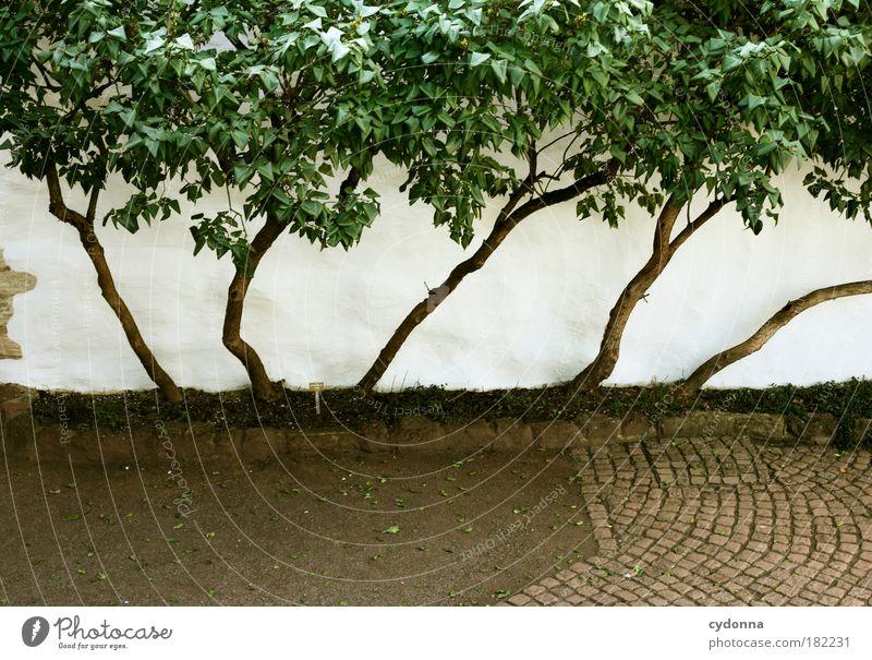 Platzsparend Natur grün schön Baum Leben Wand Freiheit Wege & Pfade Garten Mauer träumen ästhetisch Wachstum Zukunft Wandel & Veränderung einzigartig