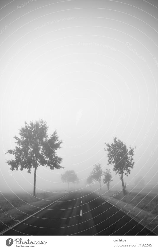 Reise ins Nichts Schwarzweißfoto Textfreiraum oben Hintergrund neutral Morgendämmerung Schwache Tiefenschärfe Weitwinkel Landschaft Herbst Nebel Baum