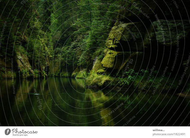 Moosfelsen in der Klamm Natur grün Baum Landschaft Erholung Felsen leuchten Ausflug Fluss harmonisch Bach Elbsandsteingebirge Naturliebe Sächsische Schweiz