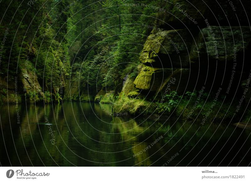 Moosfelsen in der Klamm Natur grün Baum Landschaft Erholung Felsen leuchten Ausflug Fluss harmonisch Moos Bach Elbsandsteingebirge Naturliebe Sächsische Schweiz Tschechien