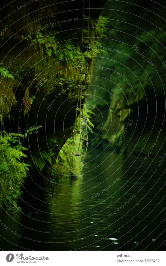klammheimlicher fluchtweg Natur grün Landschaft dunkel Felsen Fluss Schlucht Bach Farn Elbsandsteingebirge Tschechien Felsenschlucht Strickleiter