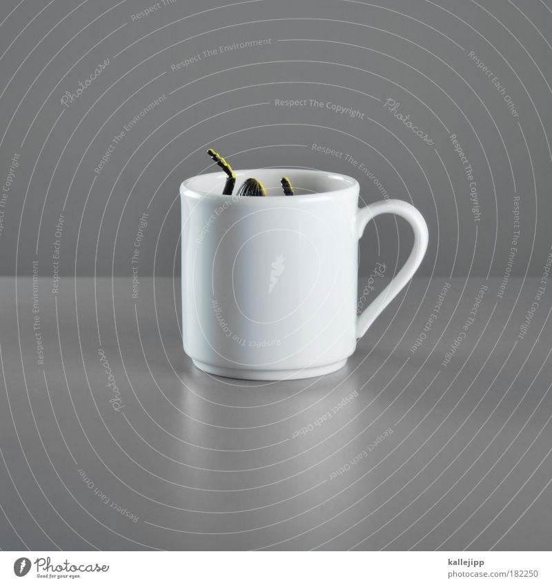 star-bug-coffee weiß Freude Tier grau Beine Tisch Kaffee trinken Insekt Humor gruselig Spielzeug Tasse Ekel Käfer Becher