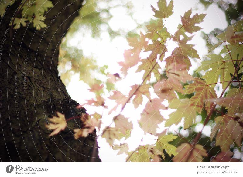 Falling for fall. Himmel Natur alt grün Baum Blatt Umwelt kalt Herbst Traurigkeit Park Zufriedenheit Wind gold rosa ästhetisch
