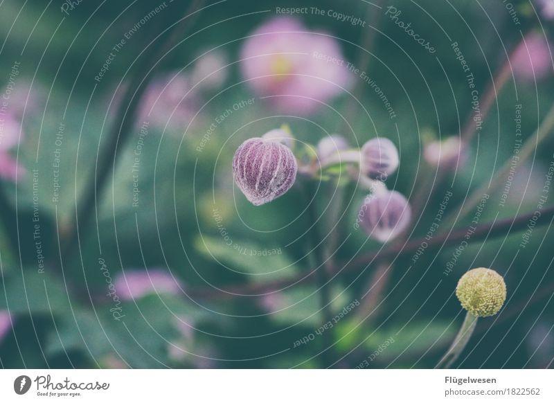Stilleben Pflanze Blume Topfpflanze exotisch orange Blütenknospen Blütenblatt Blütenpflanze Blütenstempel Blütenstiel Blütenkelch Blütenstauden blütenblattartig