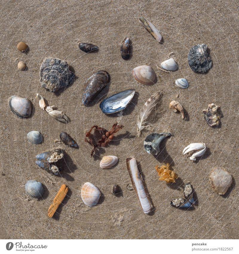 teile des ganzen Natur Urelemente Sand Strand Nordsee Ornament ästhetisch Zufriedenheit Design Strandgut Super Stillleben Muschel Krebstier Feder Holz Algen