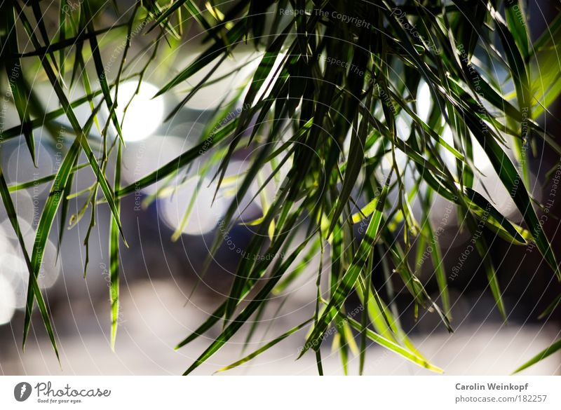 Durchblick. Natur Baum Pflanze Sommer Blatt Glück Park Landschaft Umwelt Sträucher Schönes Wetter Grünpflanze Lichtpunkt