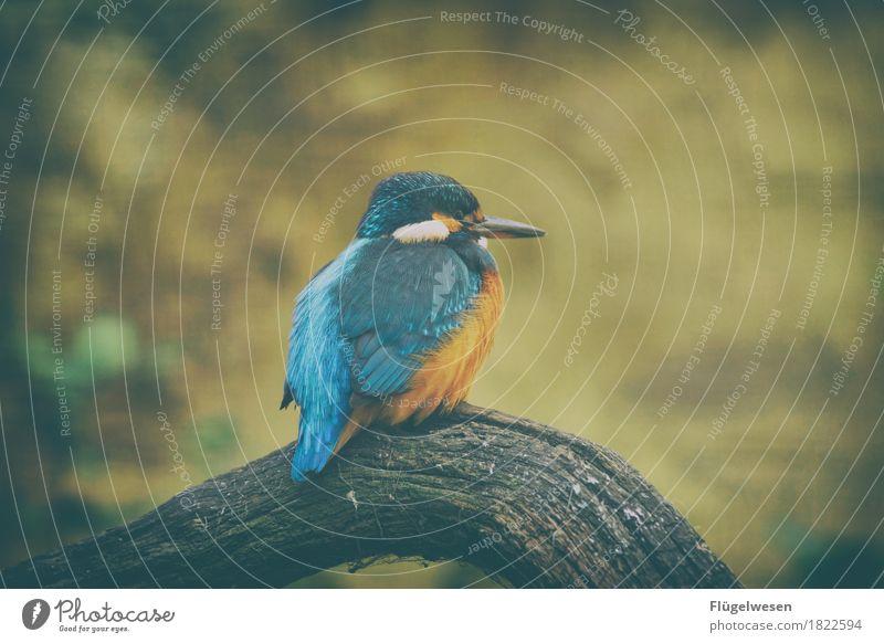 Der blaue Vogel Safari Expedition Umwelt Natur Klima Tier Flügel Zoo Streichelzoo 1 fliegen Vogelperspektive Vogelflug Vogelfutter Vogelkäfig Vogeljagd Fell
