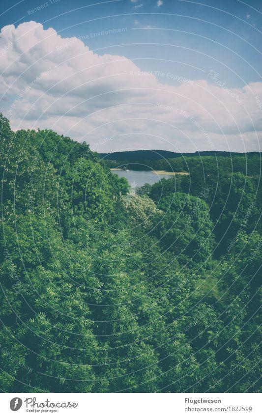 Seeblick Ferien & Urlaub & Reisen Tourismus Ausflug Abenteuer Ferne Freiheit Umwelt Natur Landschaft Himmel Klima Klimawandel Pflanze Baum Seeufer genießen Wald