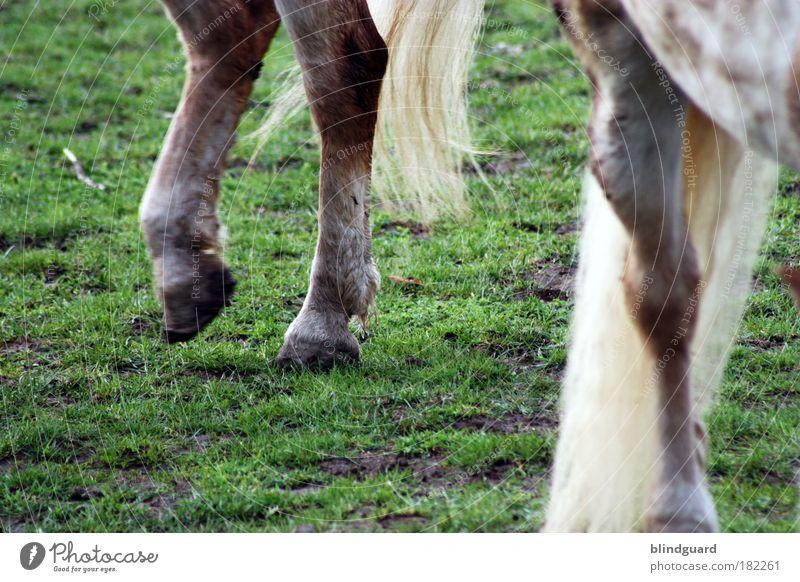 Legs Farbfoto Außenaufnahme Detailaufnahme Menschenleer Textfreiraum links Textfreiraum unten Tag Reiten Wiese Nutztier Pferd 2 Tier Tierfamilie gehen laufen