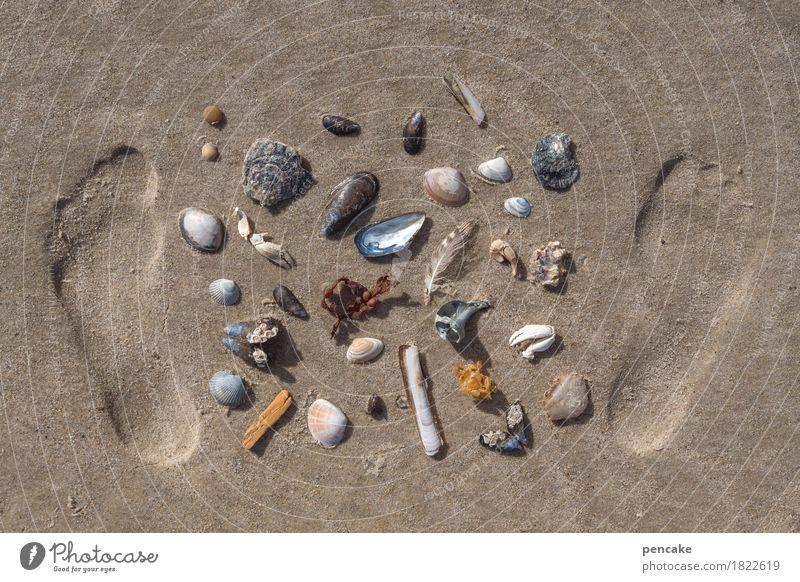 antikapitalismus | muschelwährung Fuß Natur Urelemente Sand Sommer Küste Nordsee bezahlen Blick Sammlung Muschel Schneckenhaus Miesmuschel Krebstier Fußspur