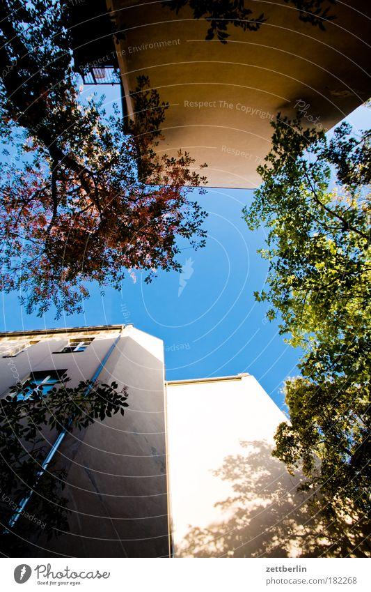 Herbstanfang Himmel Baum grün Pflanze Blatt Haus Wolken Mauer Gebäude Fassade Ecke Terrasse Hinterhof Mieter Hof Vermieter