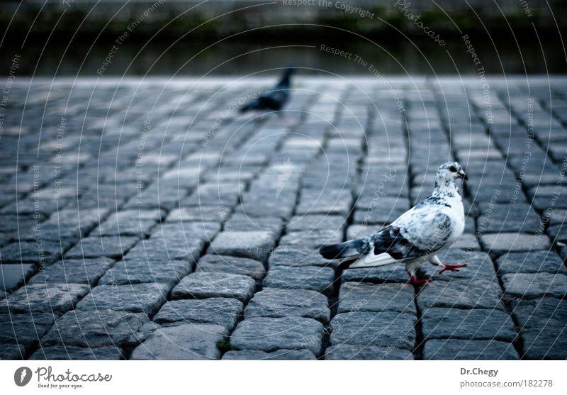 blau weiß Stadt Tier schwarz Umwelt Landschaft Herbst grau Glück Vogel Angst Wildtier wild gefährlich stehen