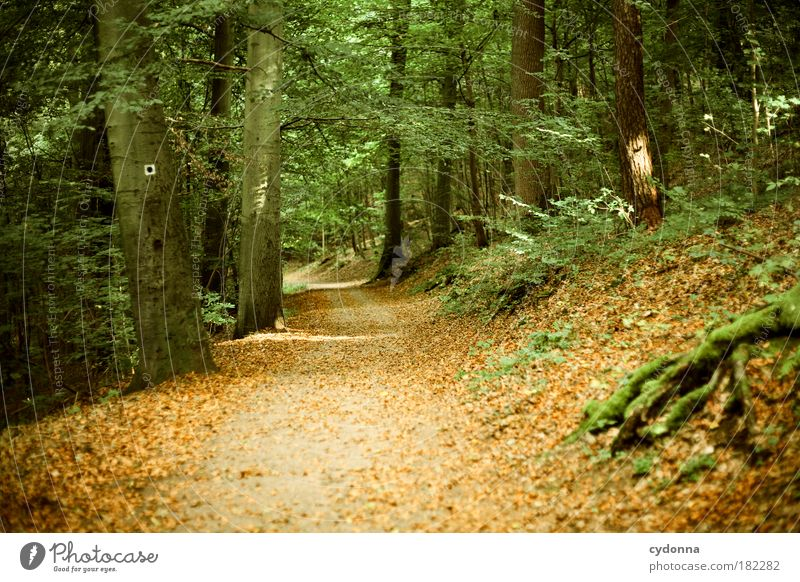 Herbstweg Natur schön Baum Blatt ruhig Wald Erholung Leben Freiheit Herbst Landschaft Umwelt Bewegung Wege & Pfade träumen Ausflug