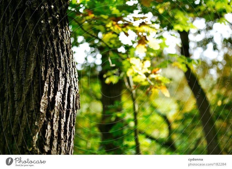 Baumrinde Natur schön Blatt ruhig Wald Erholung Herbst Leben Umwelt träumen Zeit Zufriedenheit Kraft einzigartig Vergänglichkeit