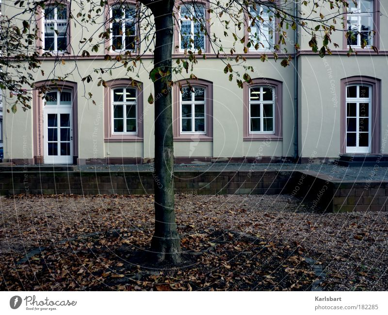 oktober. Baum Blatt Haus Herbst Fenster Wand Architektur Garten Traurigkeit Mauer Park Kunst Fassade Studium Schulgebäude Spaziergang