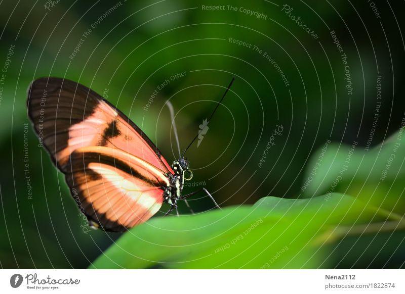Wann ist es endlich wieder Frühling? Umwelt Natur Pflanze Tier Sommer Klima Wetter Schönes Wetter Blatt Schmetterling 1 grün orange Einsamkeit einzeln ruhig