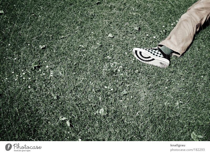 Liegen lernen grün Rasen Hose Turnschuh Gänseblümchen Erholung Pause Freizeit & Hobby Park Jugendliche liegen umfallen Spielen Gras Wiese Konzert Musikfestival