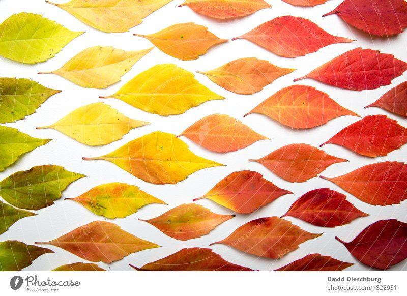 Color of autumn Natur Pflanze Herbst Schönes Wetter Blatt mehrfarbig gelb grün orange rot Querformat Strukturen & Formen Hintergrundbild graphisch Farbverlauf