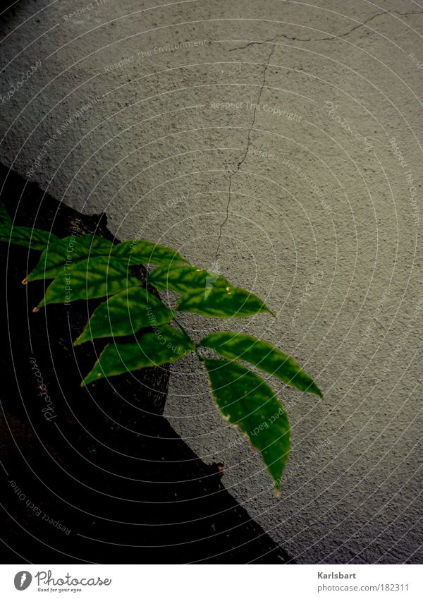 stück. grün. Lifestyle Design Haus Pflanze Baum Sträucher Blatt Mauer Wand Fassade hängen dunkel kalt grau ruhig Traurigkeit Farbe Natur Umwelt Verfall