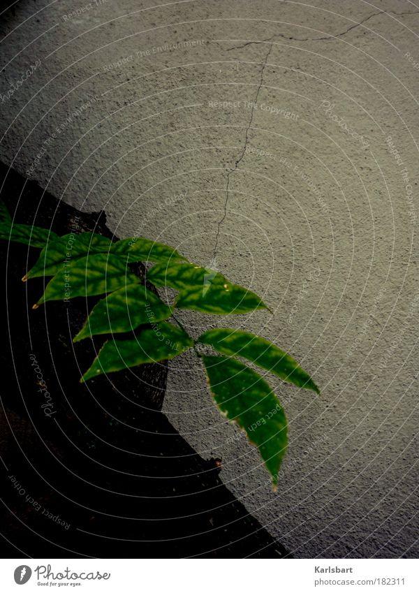 stück. grün. Natur Baum grün Pflanze ruhig Blatt Haus Farbe Leben dunkel kalt Wand grau Traurigkeit Mauer Design