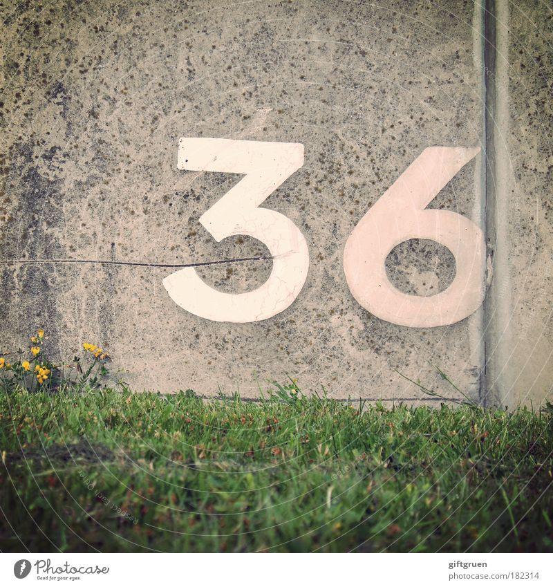 krypton Pflanze Wiese Wand Gras Stein Mauer Geburtstag Schilder & Markierungen Beton Ordnung Schriftzeichen Ziffern & Zahlen Zeichen Quadrat rechnen zählen