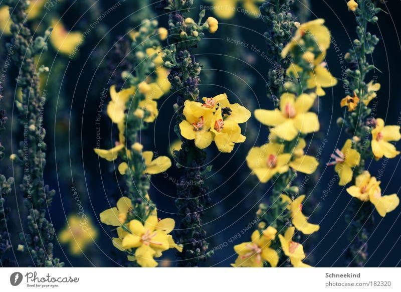 Blumenwald Farbfoto Außenaufnahme Detailaufnahme Menschenleer Tag Licht Kontrast Schwache Tiefenschärfe Froschperspektive Zentralperspektive Umwelt Natur