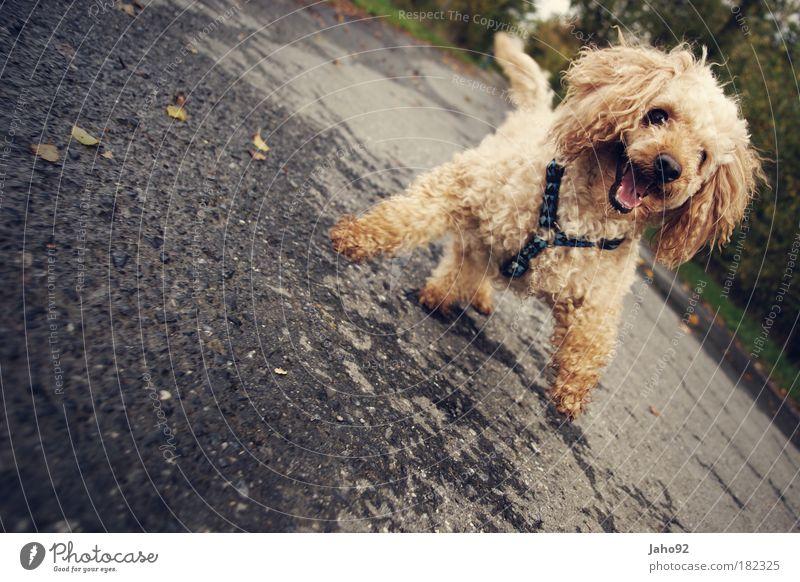 Ich will ein Leckerli! Farbfoto Außenaufnahme Textfreiraum links Tag Weitwinkel Tierporträt Blick in die Kamera Freizeit & Hobby Spielen Umwelt Natur Haustier