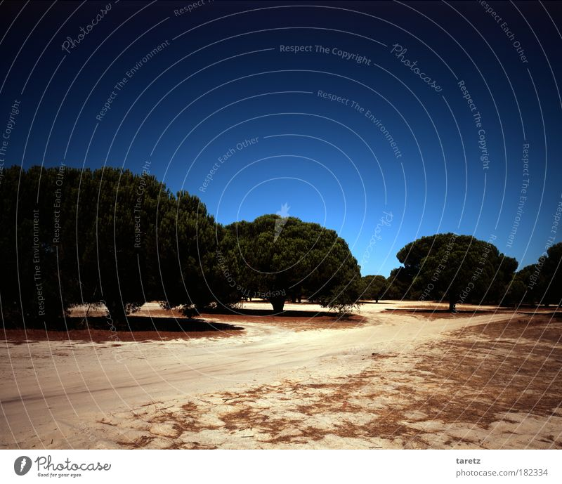 ||50|| Schattenspender Natur schön Himmel Baum Sonne blau Sommer ruhig Einsamkeit Ferne Wald Wege & Pfade Wärme Sand Landschaft leer