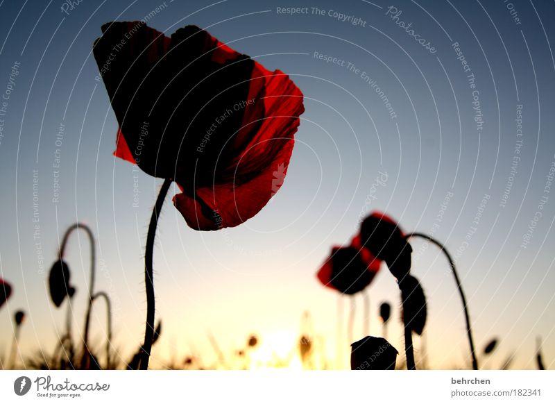 auf seite 11... Natur Himmel Sonne Blume blau Pflanze rot Sommer Wiese Blüte Wärme Landschaft Kraft Feld Hoffnung Wachstum