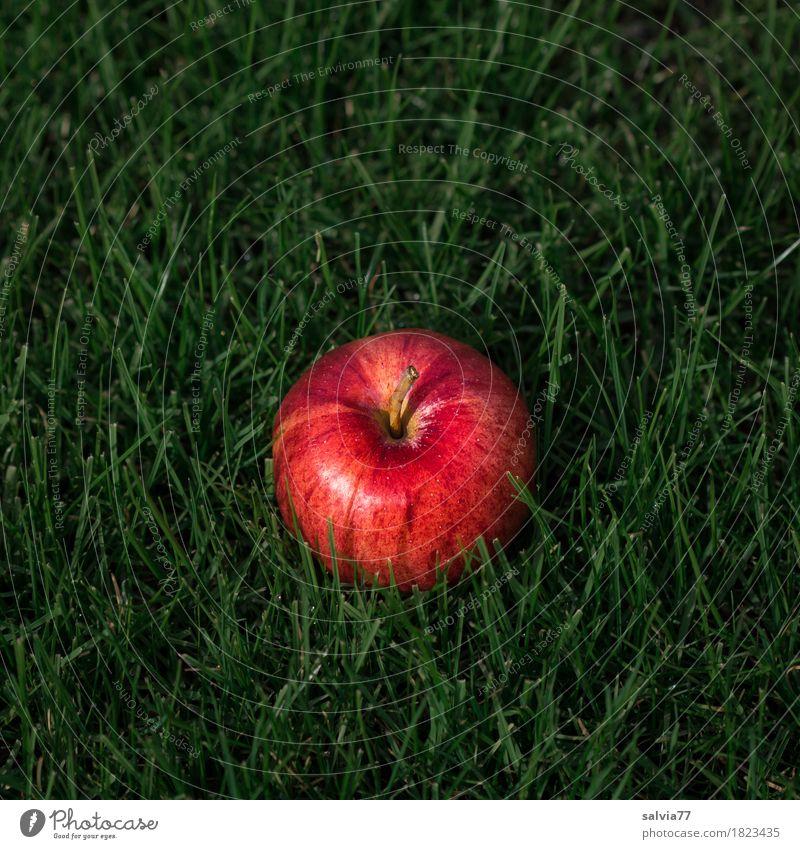 Apfel im Gras Natur grün Gesunde Ernährung rot Leben Wiese Herbst Gesundheit Garten Frucht liegen Erde frisch Vergänglichkeit rund