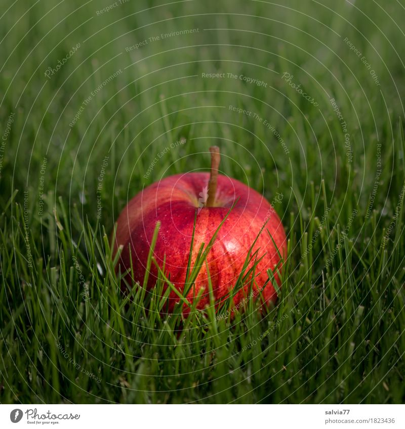 süß | oder sauer Lebensmittel Frucht Apfel Gesundheit Gesunde Ernährung Sommer Herbst Garten frisch lecker positiv grün rot vitaminreich Vitamin C fruchtig