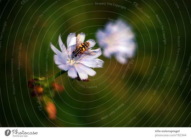 sexualkundeunterricht Natur grün Pflanze Sommer Blume Tier Blüte Wildtier wild natürlich Ausflug Idylle violett Blühend entdecken Honig