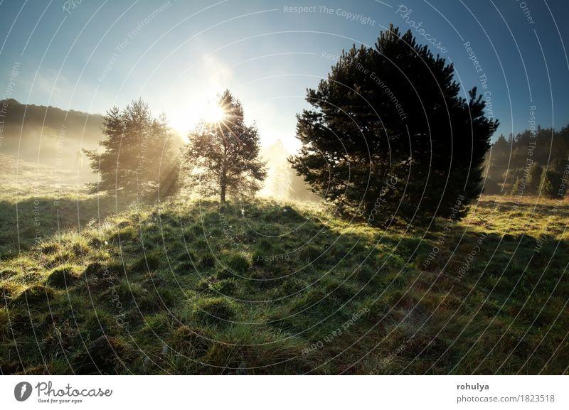 Sonnenstrahlen durch Kiefern auf nebligen Hügeln Sommer Natur Landschaft Himmel Nebel Baum Gras Wiese grün nadelhaltig Stern Sonnenschein Strahl