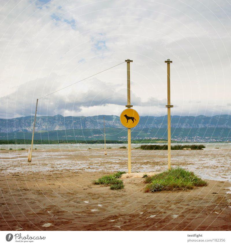 soline Farbfoto Tag Umwelt Landschaft Urelemente Sand Luft Gewitterwolken Klima Schönes Wetter schlechtes Wetter Berge u. Gebirge Meer Hund 1 Tier