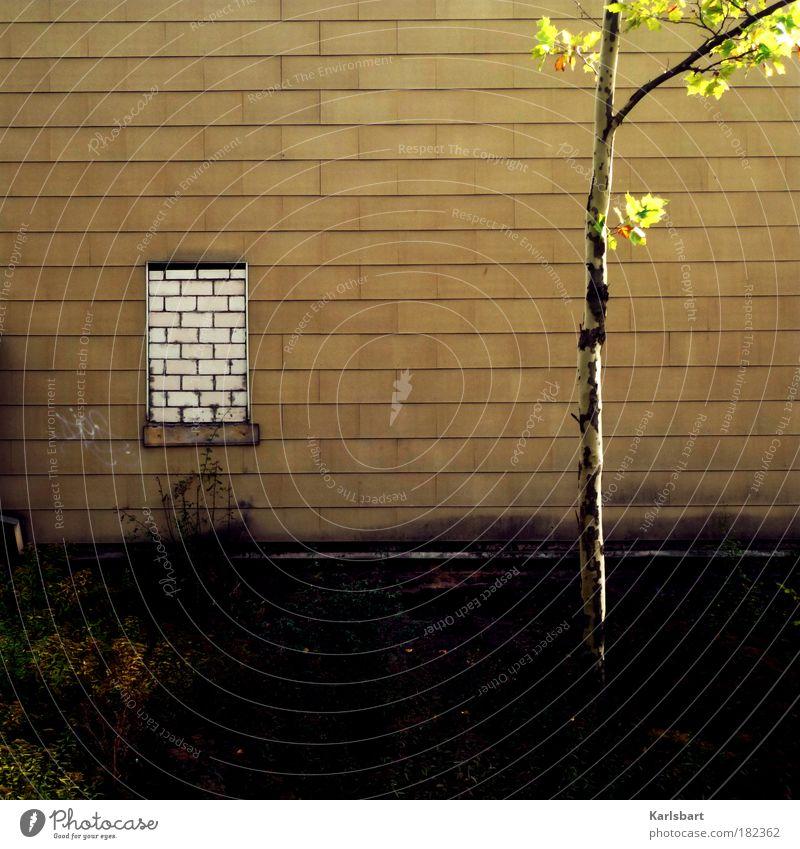 wall. window. Baum Stadt Blatt Haus Wiese Wand Fenster Gras Traurigkeit Mauer Gebäude Stimmung Armut Fassade Design Lifestyle