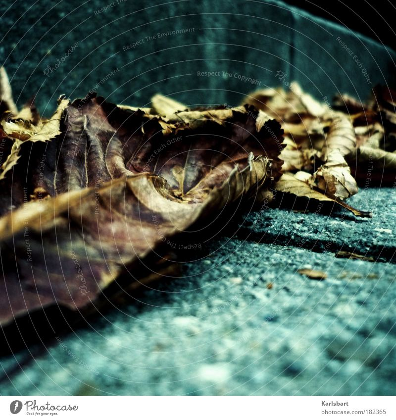 vom winde. verweht. Natur ruhig Blatt Straße kalt Erholung Herbst Wand Bewegung Traurigkeit Mauer Wege & Pfade Park Stimmung Wind