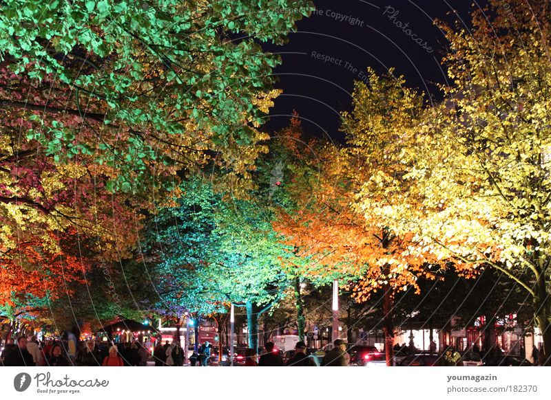 Unter den Linden Natur Himmel Baum Winter kalt Herbst