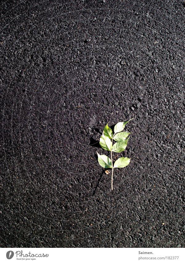 überleben ist nicht immer leicht Natur grün schön Pflanze Blatt Einsamkeit Straße Leben grau liegen kaputt Perspektive Trauer Vergänglichkeit Vergangenheit