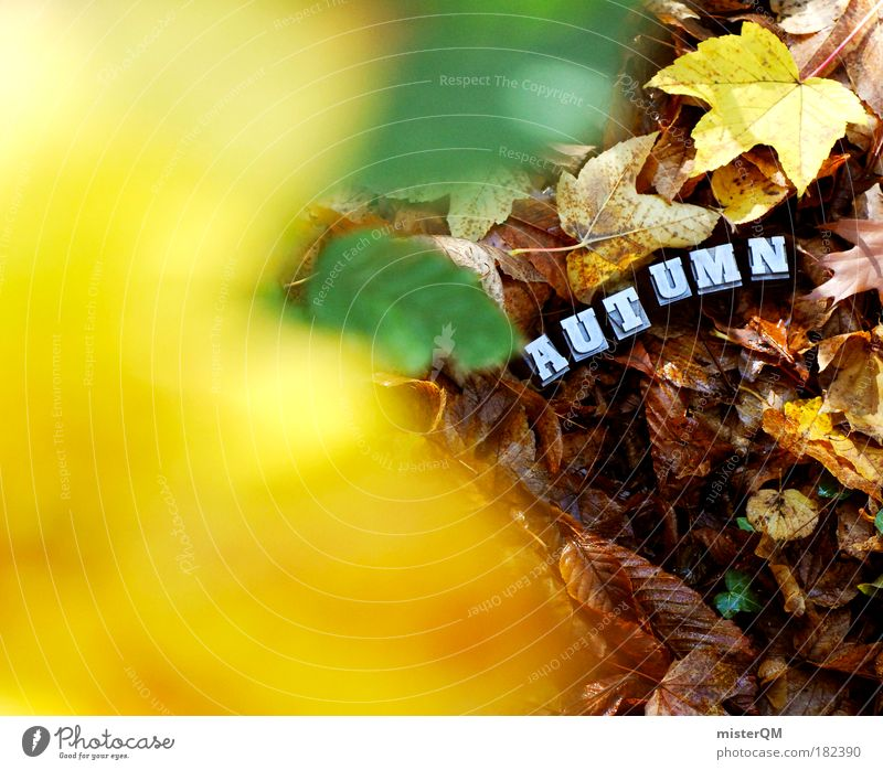 Under the Surface. Natur Blatt gelb Herbst Kunst braun Schriftzeichen ästhetisch Boden Spaziergang Buchstaben Suche Zeichen Jahreszeiten verstecken Herbstlaub